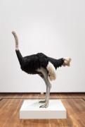 David Shrigley: Lose Your Mind. Ostrich, 2009 at Instituto Cultural Cabañas, Guadalajara, Mexico November 2015.
