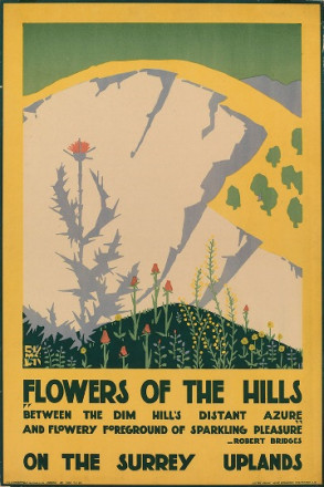 FLOWERS OF THE HILLS