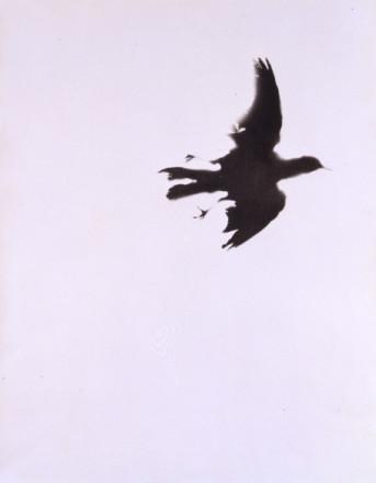 SINGLE BIRD 1