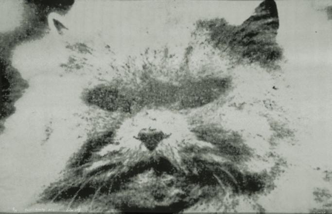 NO.1  CAT