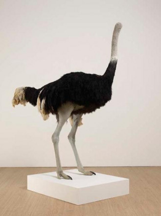 Shrigley David-P8525 Ostrich
