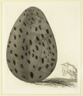 'THE BOY HIDDEN IN AN EGG' FROM ILLUSTRATIONS FOR SIX FAIRY TALES FROM THE BROTHERS GRIMM 1969
