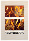 O FOR ORNITHOLOGY