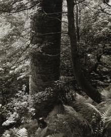 Chimney and ferns