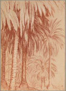 PALMS, TENERIFFE