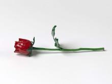 fagen-rose1