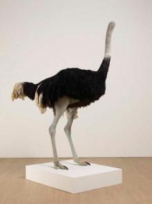 Shrigley David-P8525 Ostrich