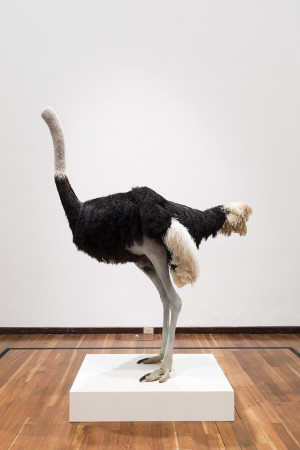 David Shrigley: Lose Your Mind. Ostrich, 2009