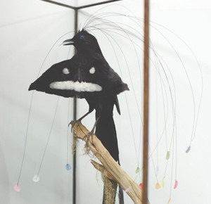 THE FOURTH BARON EGERTON'S 16 PLUMED BIRD OF PARADISE, Ryan Gander