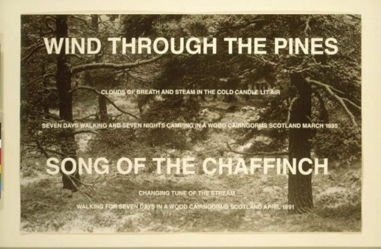 WIND THROUGH THE PINES (TWO WALKS MARCH 1985 AND APRIL 1991)