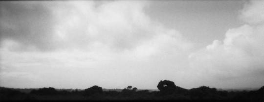 Billingham Richard-P8501 Untitled Gower
